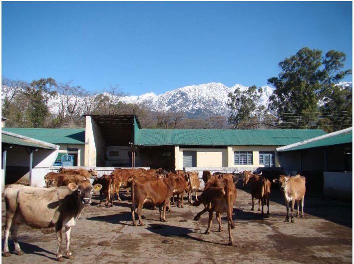 LivestockFarm